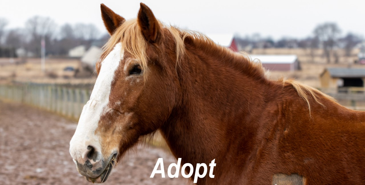 Last Chance Ranch – Saving the World one Animal at a Time